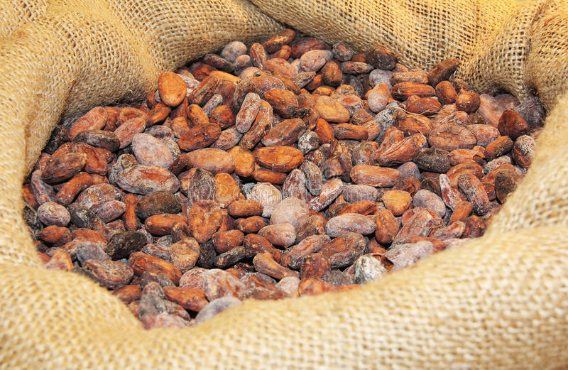 Download Cocoa ia a bag stock photo. Image of full, background - 26786710