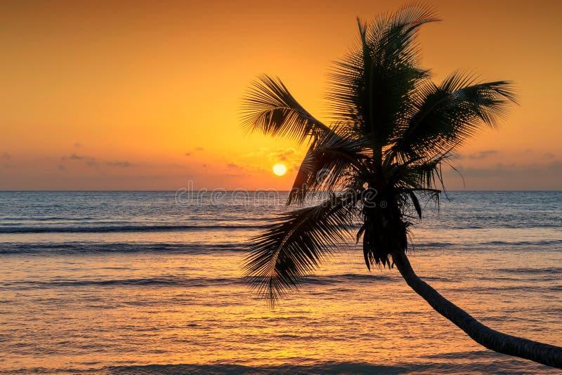 Cocoen gömma i handflatan på solnedgången över det tropiska havet royaltyfria bilder