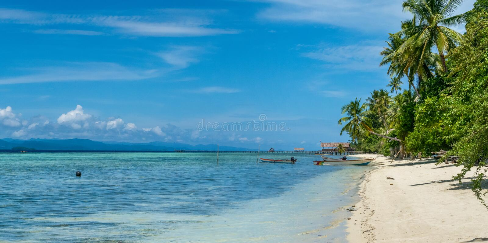 Coconat Palm on Kri Island, Homestay and Pier in Background. Raja Ampat, Indonesia, West Papua. Wide stock images