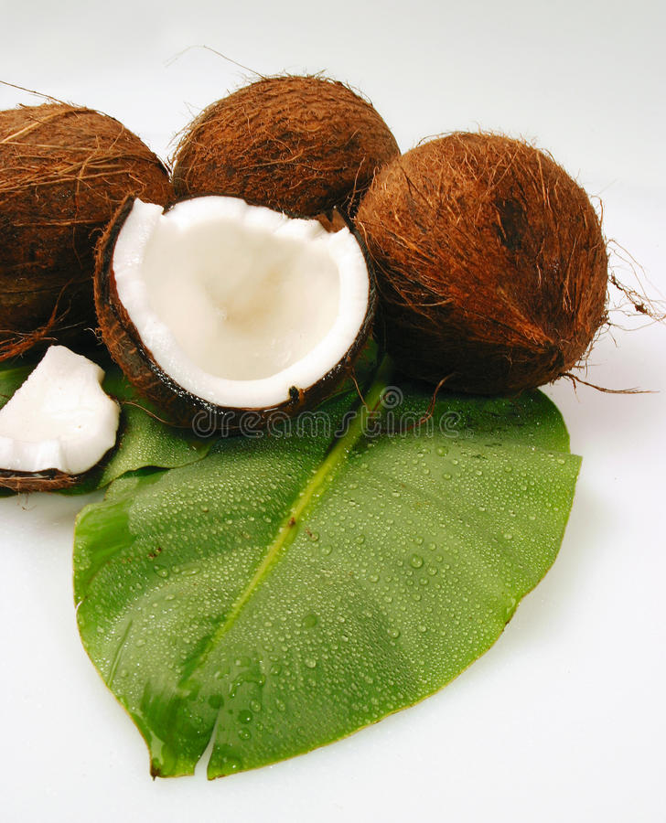 Download Coconut stock photo. Image of object, gourmet, meal, drink - 11039674