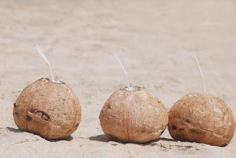 Download Coconut stock photo. Image of food, coconut, beach, sunshine - 11073932
