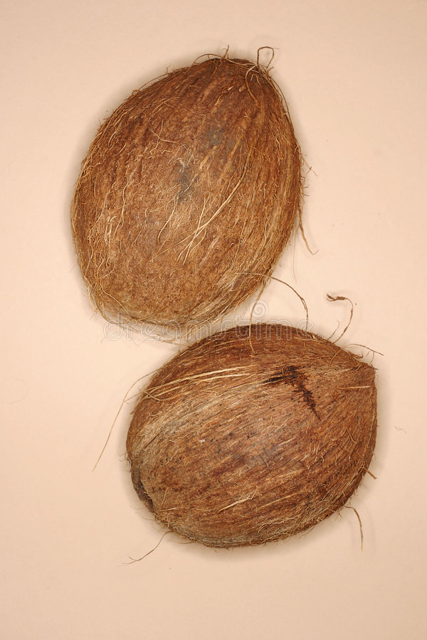 Download Coconut stock image. Image of picture, nuts, photo, tree - 175925