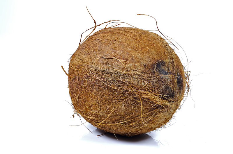 Coconut. Photo of a Coconut