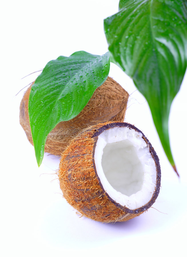 Download Coconut stock photo. Image of green, drop, palm, nutrition - 1897880