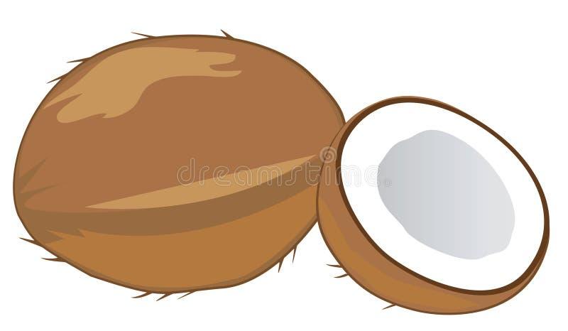 Download Coconut stock vector. Image of group, fresh, hawaii, fiber - 19494388