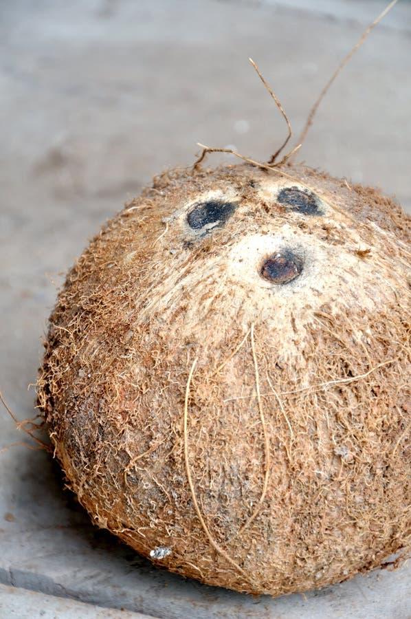 Coconut Free Stock Image