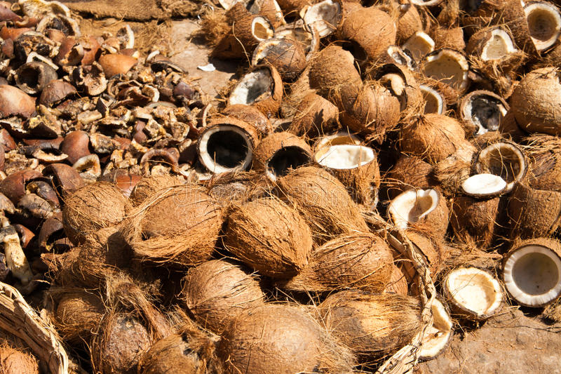 Download Coconut stock image. Image of india, open, fruit, brown - 20537643