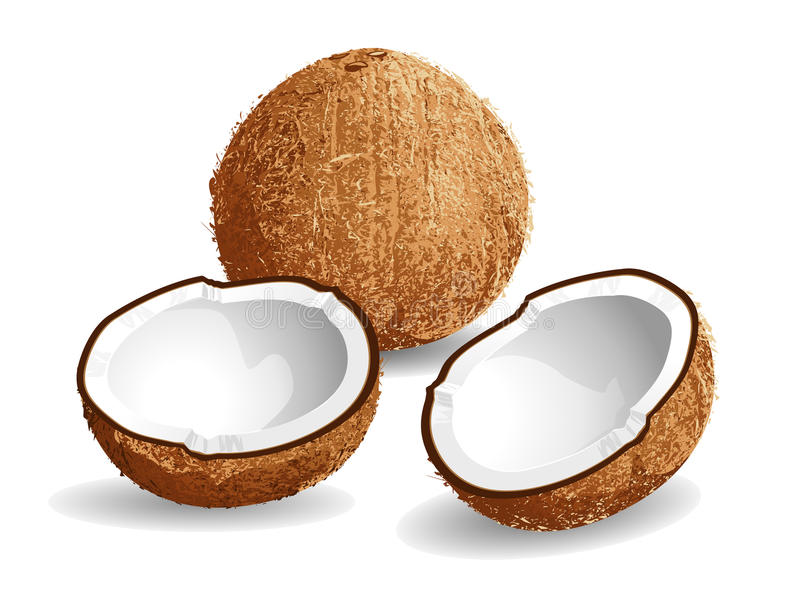 Coconut. Realistic vector illustration of a coconut and half coconuts