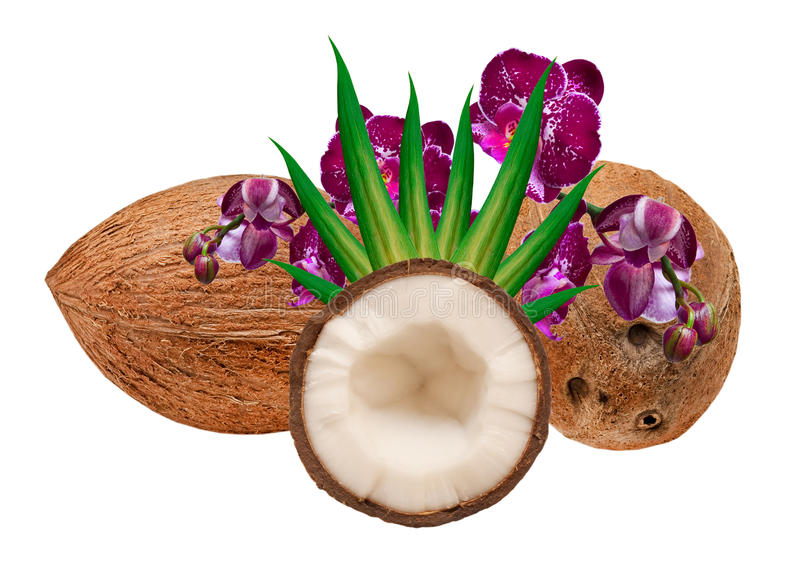 Download Coconut stock image. Image of brown, closeup, isolated - 23164973