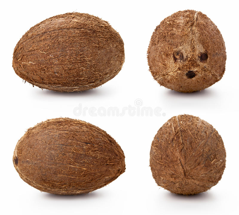 Download Coconut stock image. Image of background, exotic, fresh - 23919247