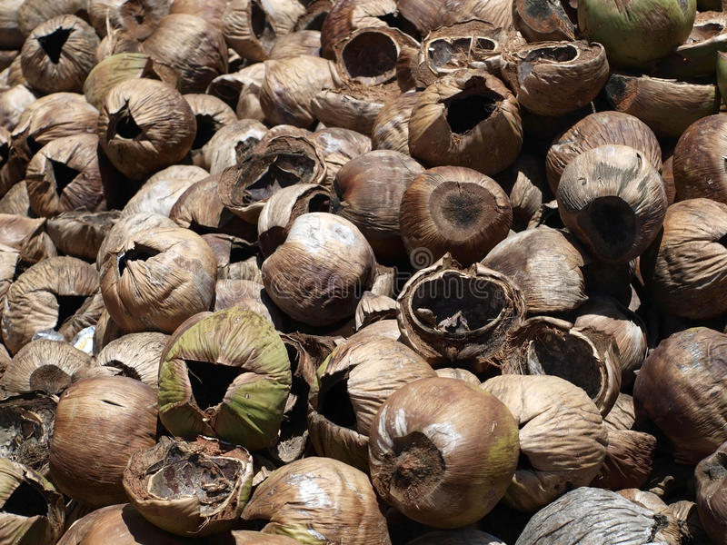 Download Coconut stock photo. Image of healthy, dried, coco, agriculture - 24951260
