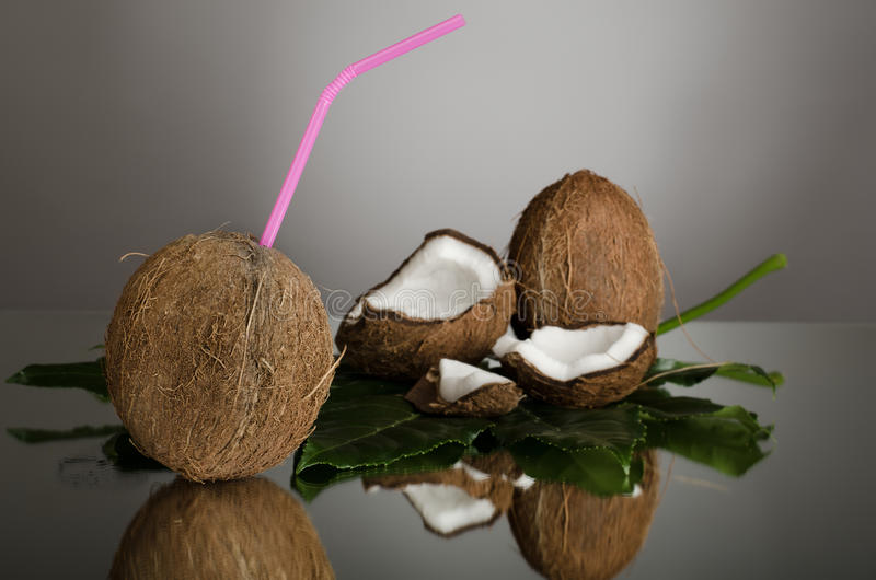 Download Coconut stock photo. Image of drink, half, branch, coco - 26528036