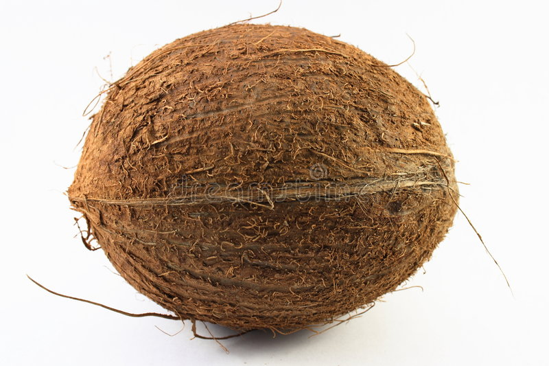 Download Coconut stock photo. Image of hard, white, galley, palm - 2998108