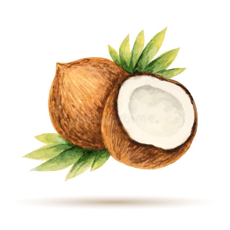 Free Coconut Royalty Free Stock Photo - 51265175