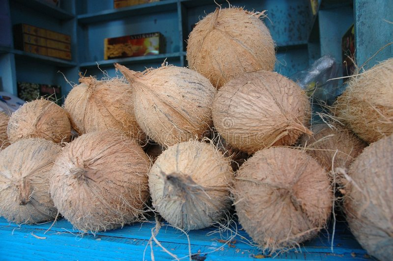 Download Coconut stock photo. Image of display, vegetable, coconut - 629290