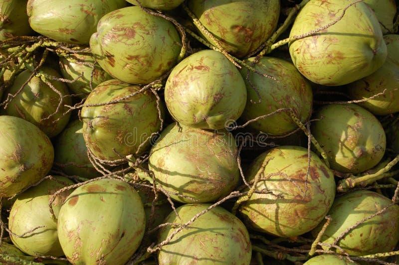 Download Coconut stock image. Image of tropical, copacabana, refresh - 821015