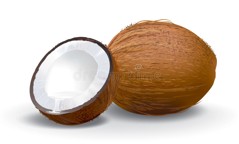 Coconut. Detailed vector illustration. The original file is ready for download
