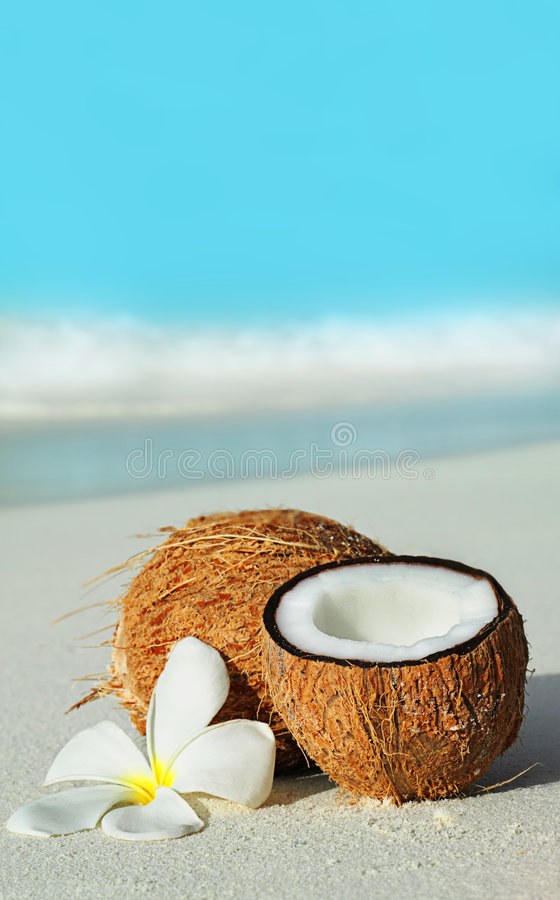 Free Coconut Stock Images - 8941564