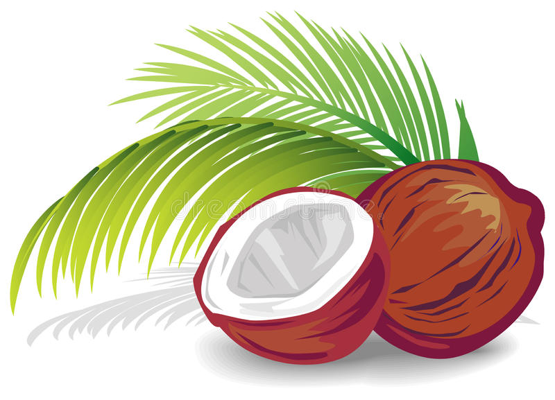 Coconut royalty free illustration