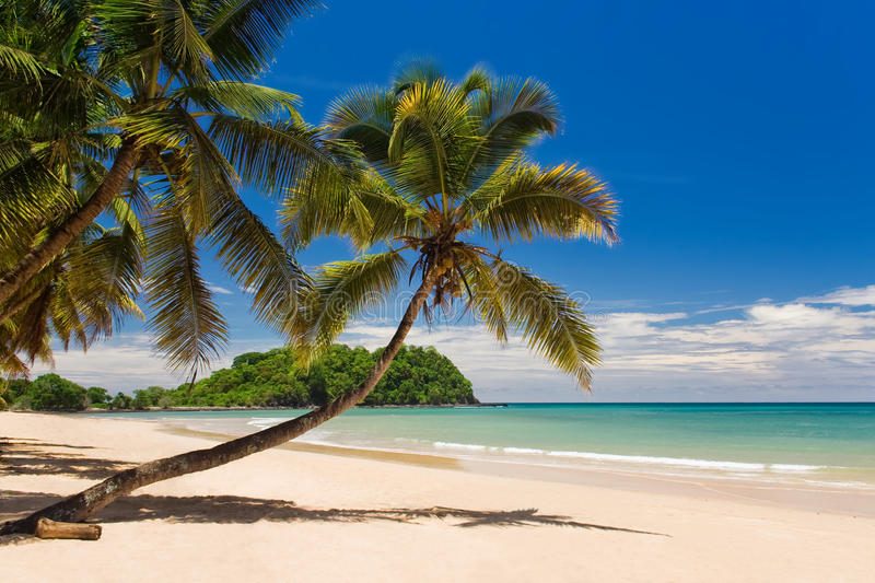 Download Coconut on the beach stock image. Image of horizon, seascape - 13511533