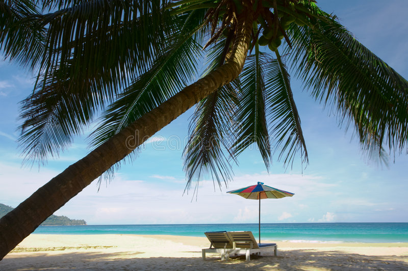 Coconut beach. View of big coconut palm and two chairs with umbrella beneath royalty free stock photo