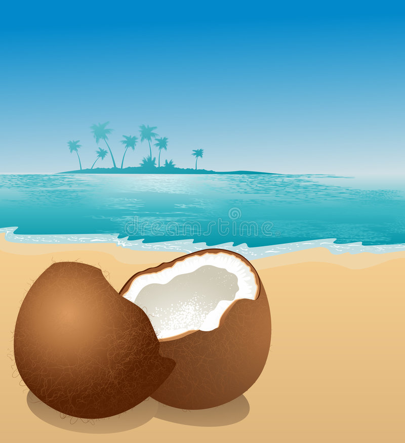 Download Coconut on the beach stock vector. Image of scene, crack - 7028567