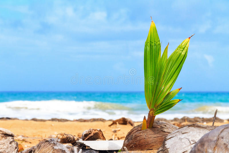 Coconut beach royalty free stock photography