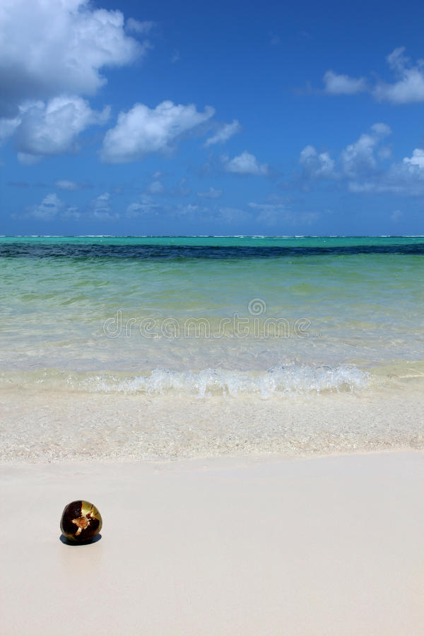 Dominican Republic, Punta Cana - coconut on the beach stock photo