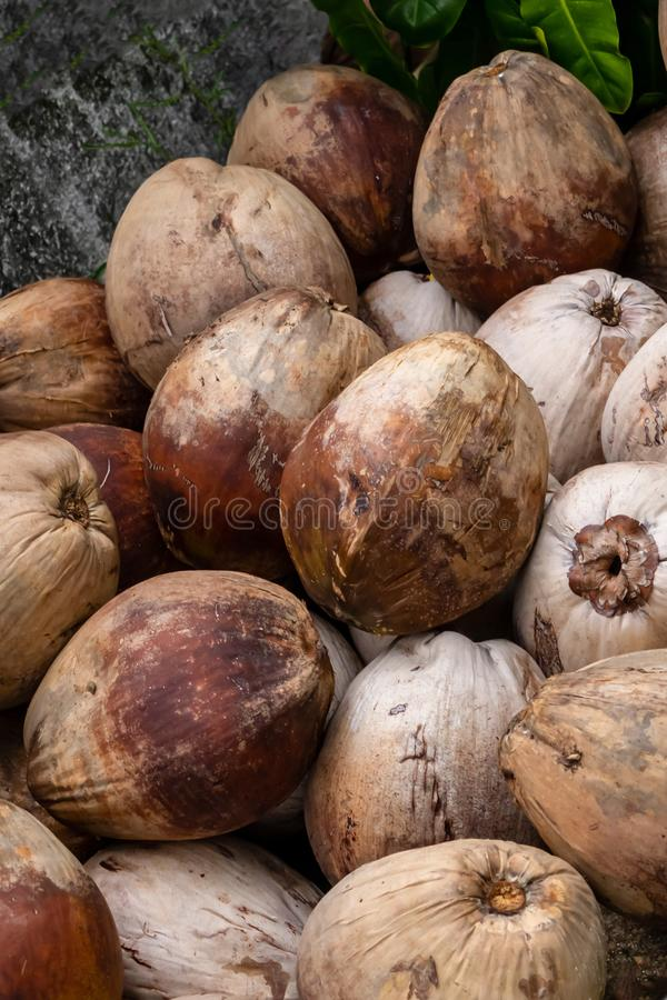 Coconut brown fruit palm trees many nuts pile close-up vertical background design asia tropical stock photos