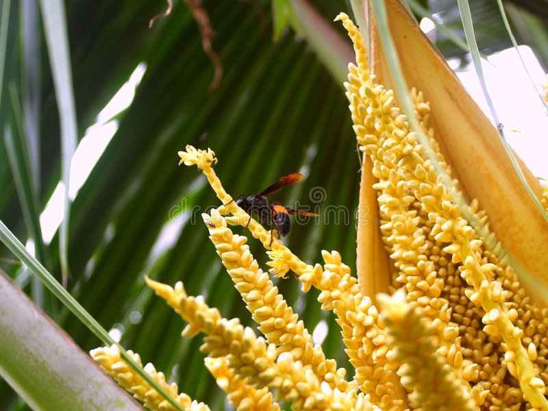 Download Coconut and bug 1 stock image. Image of drink, island - 1120465