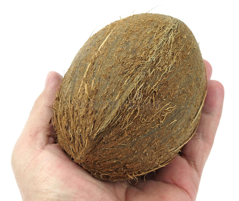 Coconut Close-up In My Hand Stock Photos