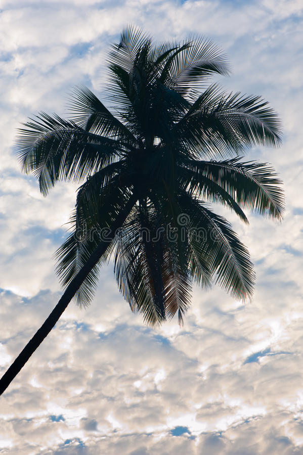 Coconut with clouds royalty free stock photography