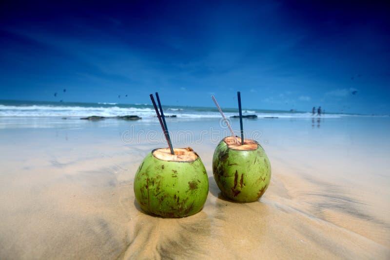Coconut cocktail stock photo