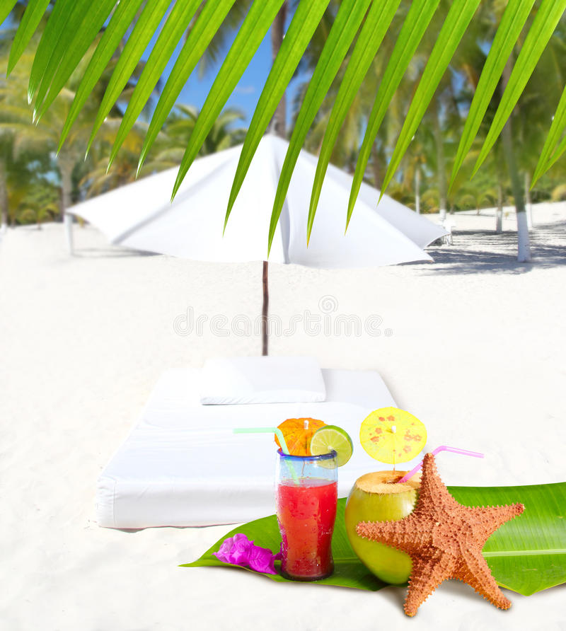 Coconut and cocktail beverages in palm trees stock photo
