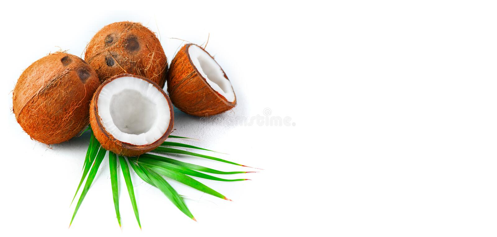 Coconut with coconuts palm tree leaf isolated on a white background. Border design. Wide angle. Fresh raw organic half of coco nut. Healthy Food, skin care royalty free stock photos