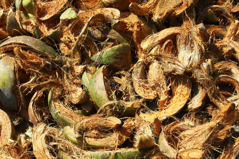 Download Coconut Coir fibre stock image. Image of samui, yellow - 17645731
