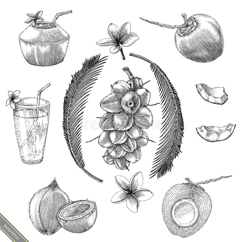 Coconut collection hand drawing vintage stlye stock illustration