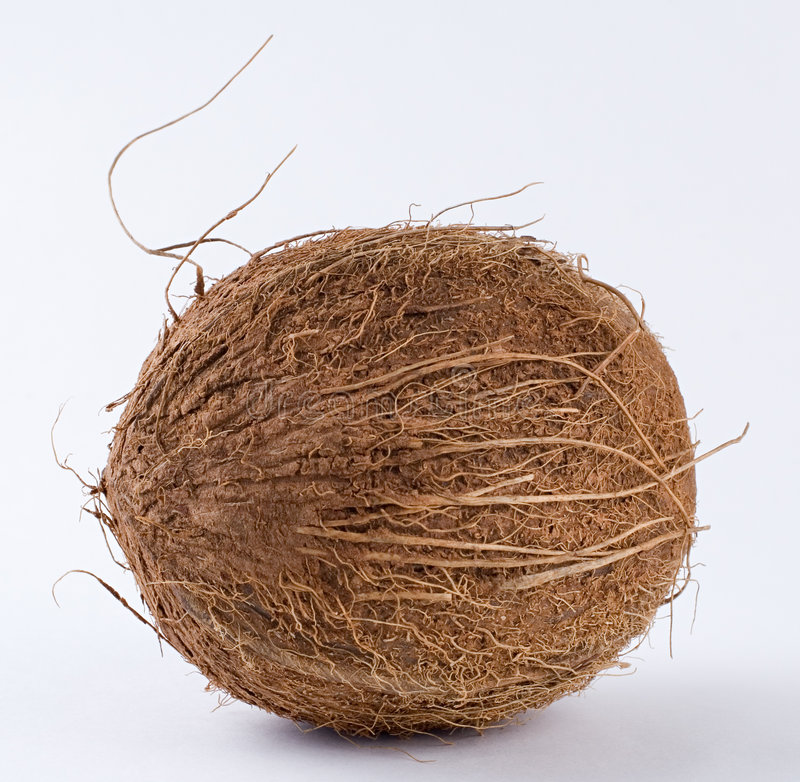 Download Coconut in detail stock photo. Image of milk, fresh, vegetarian - 2323714