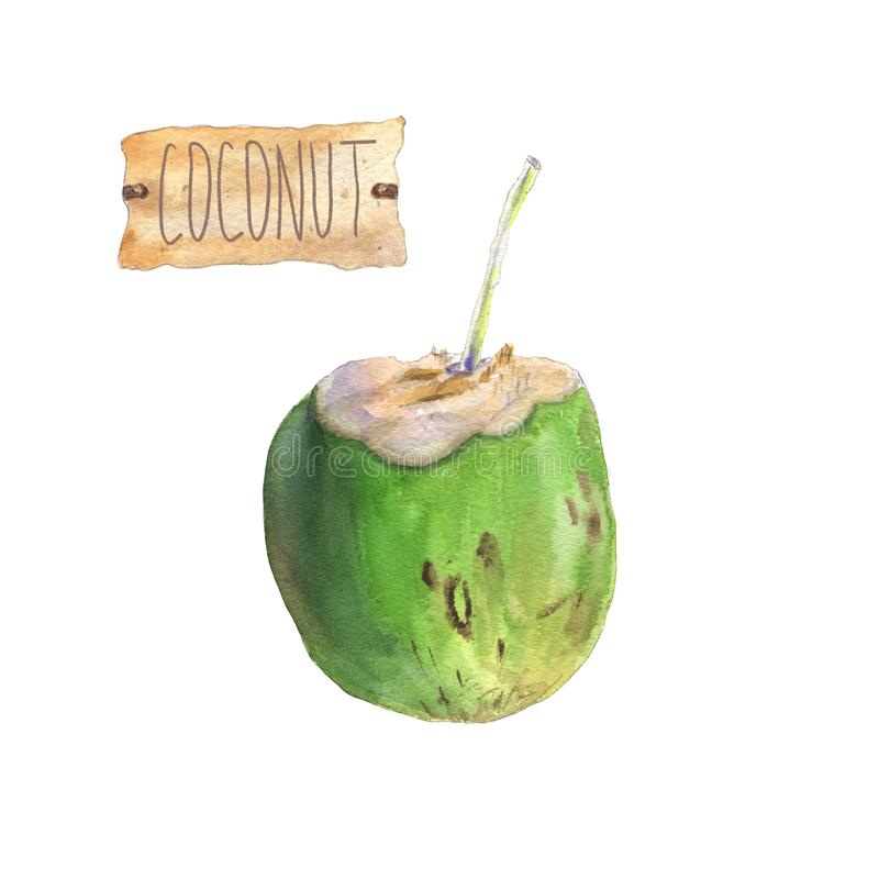 Coconut drink with craft paper tag. Watercolor painting of a green coconut with a brown craft paper tag. Coconut drink with a straw. Tropical fruits greeting royalty free illustration