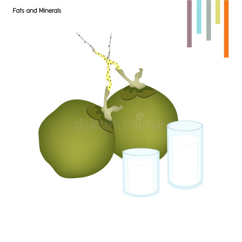Coconut with Fats and Minerals on White Background. Healthcare Concept, Illustration of Coconut with Fats and Minerals Tablet, Essential Nutrient for Lift stock illustration