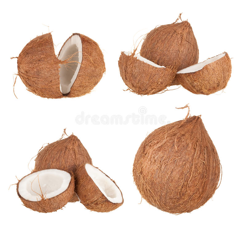 Coconut fruit stock photography