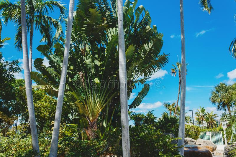 Coconut green palm trees under the sun, tropical exotic beautiful background. Summer, holidays, luxury resort, tourism vacation. Concept stock photos