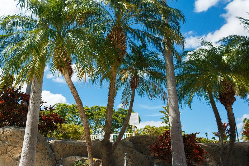 Coconut green palm trees under the sun, tropical exotic beautiful background. Summer, holidays, luxury resort, tourism vacation. Concept stock image