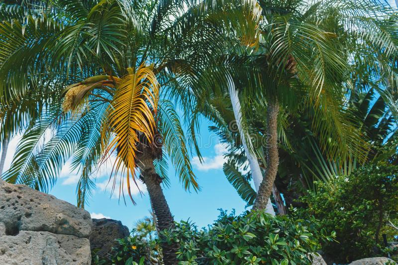 Coconut green palm trees under the sun, tropical exotic beautiful background. Summer, holidays, luxury resort, tourism vacation. Concept royalty free stock photography