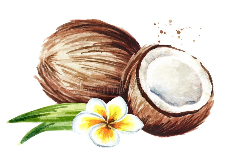 Coconut with half, flower and green leaves. Watercolor hand drawn illustration isolated on white background. stock illustration