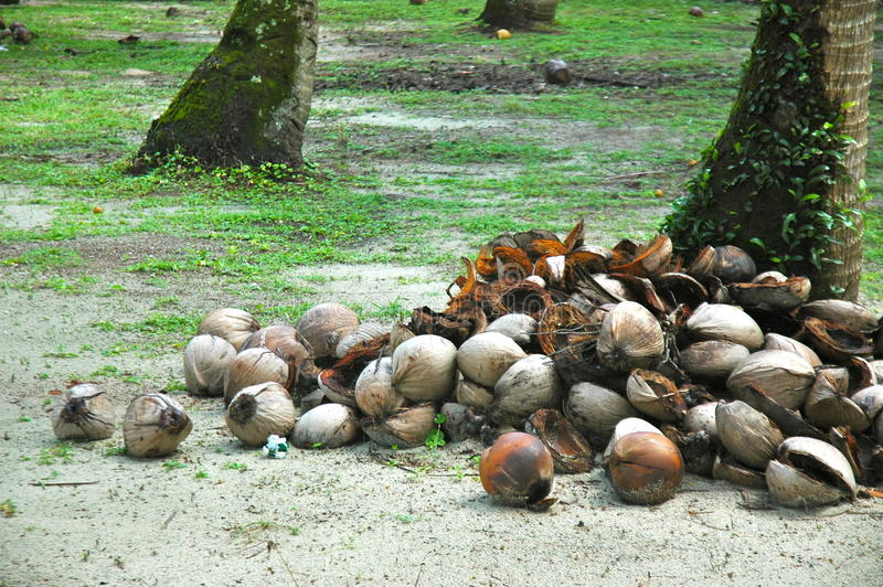 Coconut husks royalty free stock photo