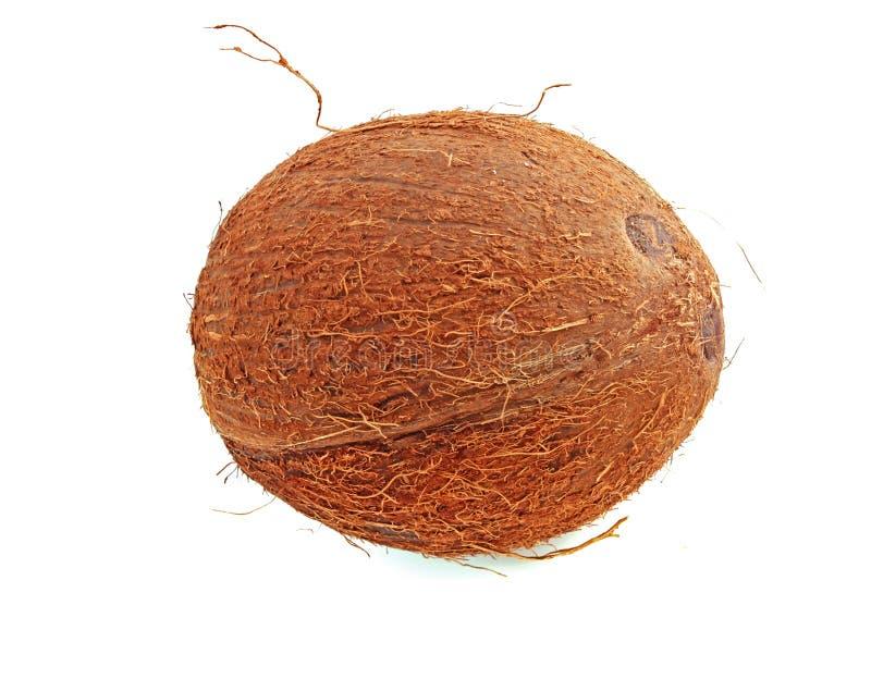 Coconut isolated royalty free stock photo
