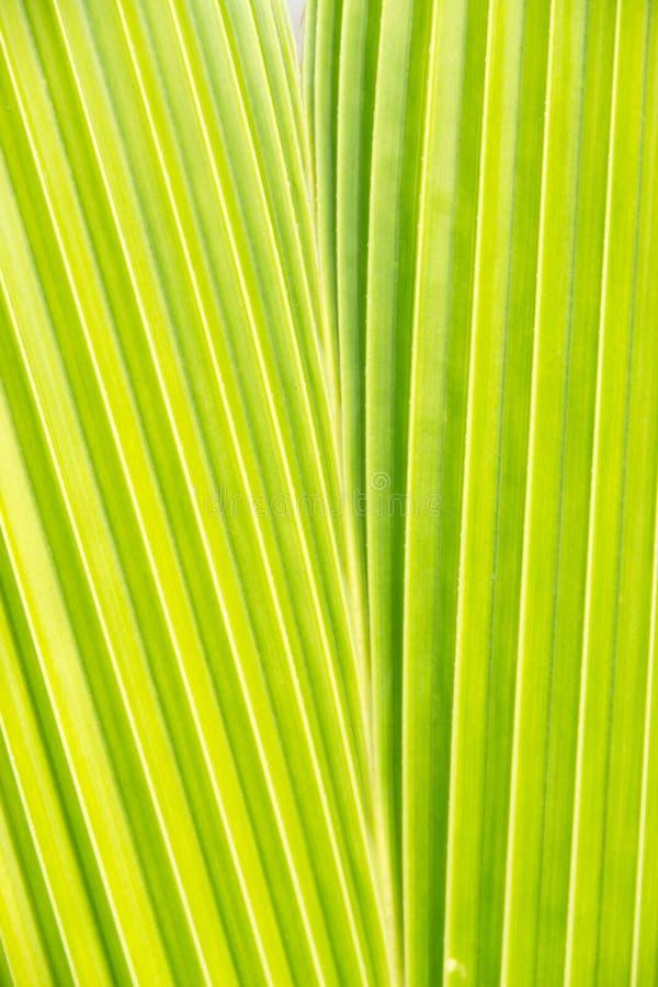 Download Coconut Leaf Pattern Detail Stock Photo - Image: 25903644