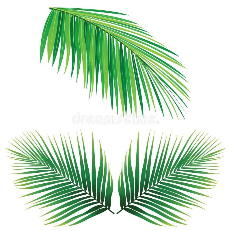 coconut leaf vector stock vector illustration of palm 54110543 rh dreamstime com palm leaf vector free download palm leaf vector png