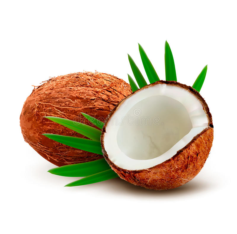 Coconut with leaves. stock illustration